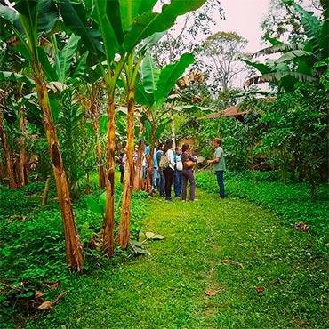 Ecoagriculturas | Ipesa
